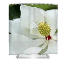 White Magnolia Shower Curtain by Sabrina L Ryan