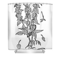 White Nettle Shower Curtain by Granger