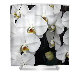 Shower Curtain featuring the photograph White Orchids by Debbie Hart
