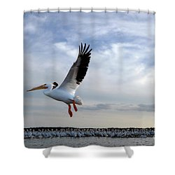 Shower Curtain featuring the photograph White Pelican Flying Over Island by Dan Friend