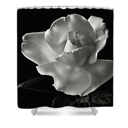 Shower Curtain featuring the photograph White Rose In Black And White by Endre Balogh