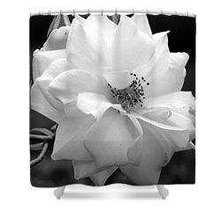Shower Curtain featuring the photograph White Rose by Michelle Joseph-Long