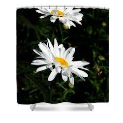 White Shasta Daisies Shower Curtain by Kay Novy
