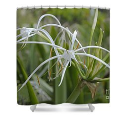 White Spider Orchid Shower Curtain