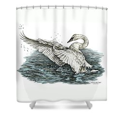 Shower Curtain featuring the drawing White Swan - Dreams Take Flight-tinted by Kelli Swan