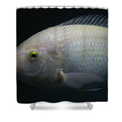 White Tilapia With Yellow Eyes Shower Curtain