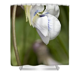 White Violet Macro Shower Curtain