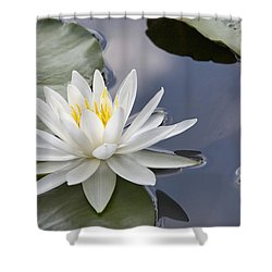 White Water Lily Shower Curtain by Vladimir Sidoropolev