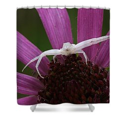 Whitebanded Crab Spider On Tennessee Coneflower Shower Curtain