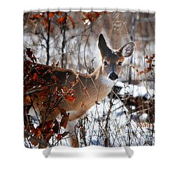 Whitetail Deer In Snow Shower Curtain
