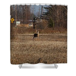 Whitetail Deer Shower Curtain by Randy J Heath