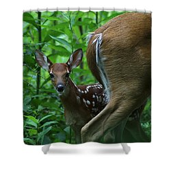 Whitetail Fawn Shower Curtain