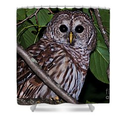 Who Are You 2 Shower Curtain by Cheryl Baxter