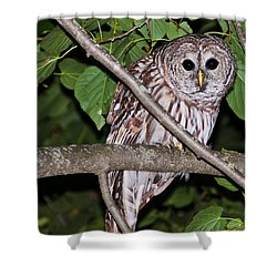 Who Are You Looking At Shower Curtain by Cheryl Baxter