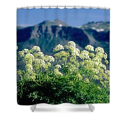 Wild Angelica Shower Curtain by James Steinberg and Photo Researchers