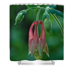Shower Curtain featuring the photograph Wild Columbine Flower by Daniel Reed