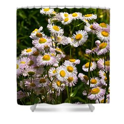 Wild Daisies Shower Curtain by Byron Varvarigos