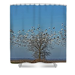 Wild Geese IIi Shower Curtain by Debbie Portwood