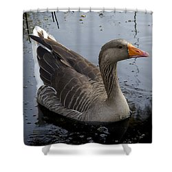 Shower Curtain featuring the photograph Wild Greylag Goose by Lynn Palmer