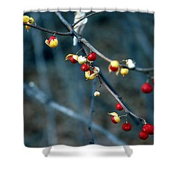 Wild Red Berries Out Of The Shell Shower Curtain by LeeAnn McLaneGoetz McLaneGoetzStudioLLCcom