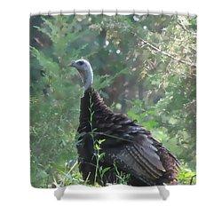 Shower Curtain featuring the digital art Wild Turkey 6380 3x4 by Maciek Froncisz