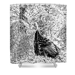 Shower Curtain featuring the photograph Wild Turkey In Black And White by Maciek Froncisz