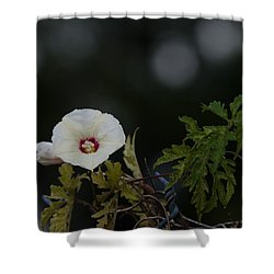 Shower Curtain featuring the photograph Wildflower On Fence by Ed Gleichman