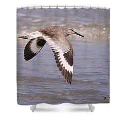 Willet In Flight Shower Curtain