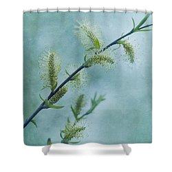 Willow Catkins Shower Curtain by Priska Wettstein