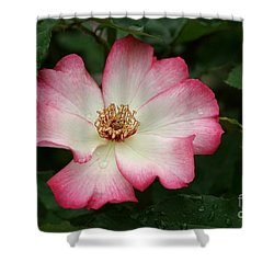 Windmill Shower Curtain by Living Color Photography Lorraine Lynch