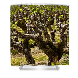 Wine On The Vine Shower Curtain by Colleen Coccia