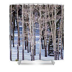 Shower Curtain featuring the photograph Winter Aspens by Colleen Coccia