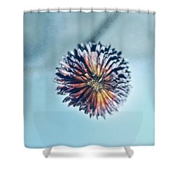Winter Blues Shower Curtain by Linda Sannuti
