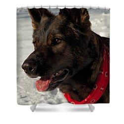 Winter Dog Shower Curtain by Karol Livote