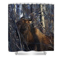 Shower Curtain featuring the photograph Winter Food by Doug Lloyd