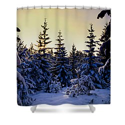 Winter Forest Shower Curtain by Hakon Soreide