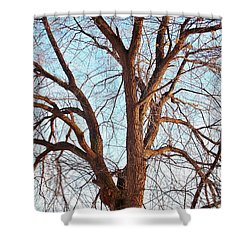 Shower Curtain featuring the photograph Winter Light by Chalet Roome-Rigdon