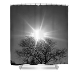 Winter Light Shower Curtain by Dorrene BrownButterfield