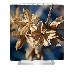 Winter Remainder Shower Curtain by Lisa Phillips