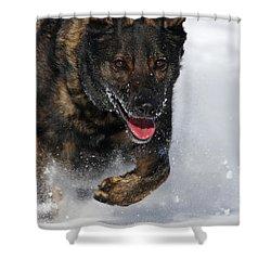 Winter Run Shower Curtain by Karol Livote