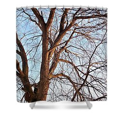 Shower Curtain featuring the photograph Winter Sunlight On Tree  by Chalet Roome-Rigdon
