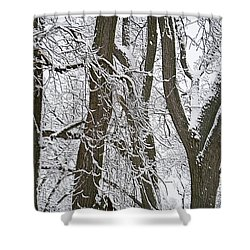 Winter Trees  Shower Curtain by Aimee L Maher Photography and Art Visit ALMGallerydotcom