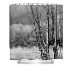 Shower Curtain featuring the photograph Winters Branch by Kathleen Grace