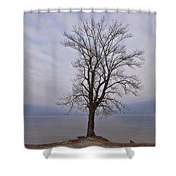 Wintertree Shower Curtain by Joana Kruse
