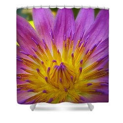 Wishing On A Star Shower Curtain by Rachel Cohen