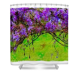 Shower Curtain featuring the photograph Wisteria Bower by Judi Bagwell