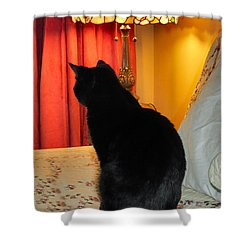 Witches Cat Shower Curtain by Art Dingo
