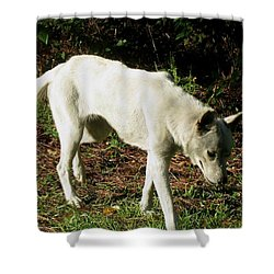 Shower Curtain featuring the photograph Wolf 2 by Maria Urso