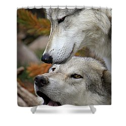 Shower Curtain featuring the photograph Wolf Talk by Steve McKinzie