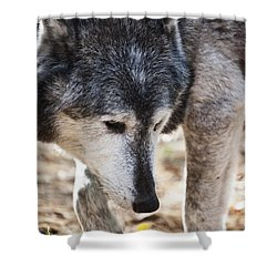 Wolfs Beauty Shower Curtain by Karol Livote